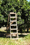Treppe zum zu ernten Stockfotografie