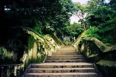 Treppe zwischen Bäumen im Wald Stockfotografie