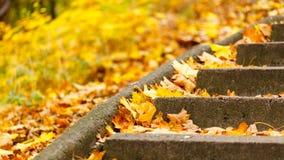 Treppen abgedeckt mit Blättern lizenzfreie stockfotos