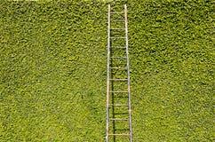 Treppen auf grüner Wand Stockfoto