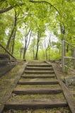 Treppen in einem Park Stockfoto