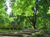 Treppen im Garten Stockfotografie