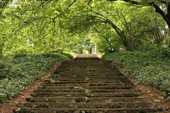 Treppen im Wald Lizenzfreie Stockfotos