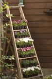 Treppen mit Blumen Stockfoto