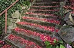 Treppen und Blumenblätter Stockfoto