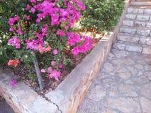 Treppenhaus-Blumen Stockbild