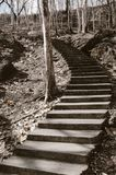 Treppenhaus, das zu den hohen Hügel über den toten Bäumen hinaus führt lizenzfreies stockfoto