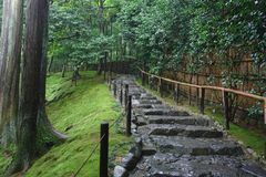 Treppenhaus in den Wald Stockfoto