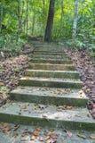 Treppenhaus im tropischen Regenwald. Lizenzfreie Stockfotos