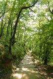 Treppenhaus im Wald Stockbild