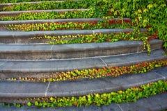 Treppenhaus mit Efeu Stockfotos