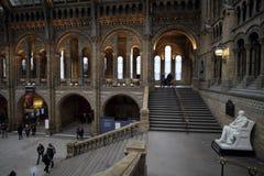 Treppenhaus an, Naturgeschichtliches Museum, London Stockfotografie