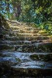 Treppenhaus zu einem verzauberten Wald Stockbilder
