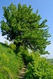Treppenhaus zum einsamen Baum Stockbild