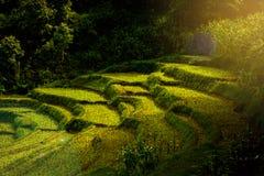 Treppenhausreispaddy morgens mit Licht der Sonne Lizenzfreie Stockfotos