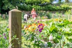 Trerice garden cornwall england uk. ladiesin the potager Stock Image