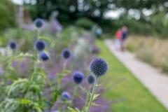 Trerice garden cornwall england uk. People Stock Image