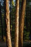 Tres árboles Imagenes de archivo