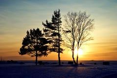 Tres árboles Foto de archivo