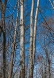 Tres árboles Imagen de archivo libre de regalías