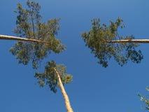 Tres árboles Fotos de archivo libres de regalías