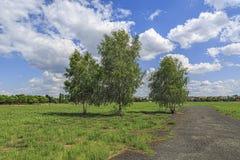 Tres árboles de abedul Fotos de archivo libres de regalías
