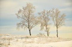 Tres árboles de abedul en la izquierda en el fondo de un campo enorme en la nieve Fotografía de archivo libre de regalías