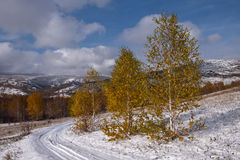 Tres árboles de abedul por el camino Fotos de archivo libres de regalías
