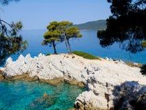 Tres árboles de Amarandos en la isla de Skopelos Fotos de archivo libres de regalías