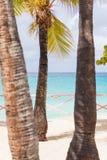 Tres árboles de coco en una playa tropical en San Martín Imagen de archivo