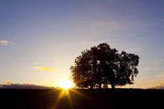 Tres árboles de roble en la puesta del sol Imágenes de archivo libres de regalías
