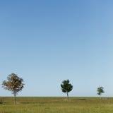 Tres árboles en campo Imagen de archivo libre de regalías
