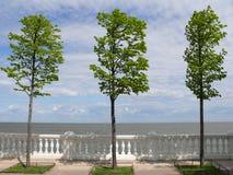 Tres árboles en la costa fotos de archivo libres de regalías