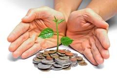Tres растя на монетках стоковое фото rf