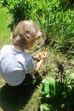 Tres años del muchacho del duende del hallazgo en un jardín foto de archivo libre de regalías