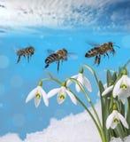 Tres abejas Foto de archivo