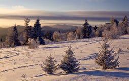 Tres abetos nevados en una cuesta de montaña Fotos de archivo libres de regalías