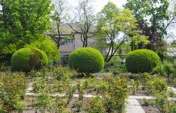 Tres arbustos verdes redondos Foto de archivo