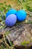 Tres azules y la violeta colorearon los huevos de Pascua en la hierba Foto de archivo