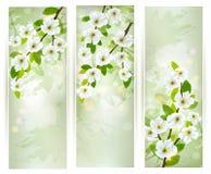 Tres banderas con las ramas de árbol florecientes. Imagen de archivo
