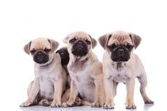 Tres barros amasados tristes y adorable que oculta detrás de ellos Imagen de archivo libre de regalías