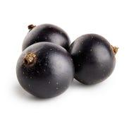Tres bayas de grosella negra Foto de archivo