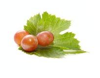 Tres bayas frescas de las uvas en la hoja verde Foto de archivo libre de regalías