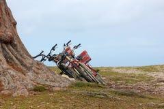 Tres bicicletas en un árbol en la playa Seychelles Foto de archivo
