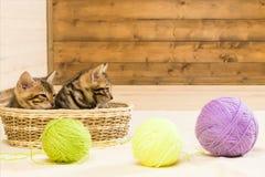 Tres bolas de lana, para dos rayaron gatitos en una cesta Imagen de archivo