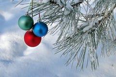 Tres bolas en la ramificación de los pinos Fotografía de archivo libre de regalías