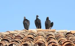Tres buitres negros en el tejado de la terracota Imagenes de archivo