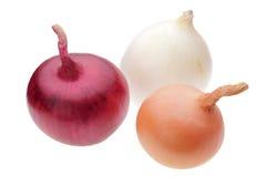 Tres bulbos de la cebolla Imagen de archivo libre de regalías