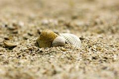 Tres cáscaras del mar de diversos colores entre Fotografía de archivo libre de regalías