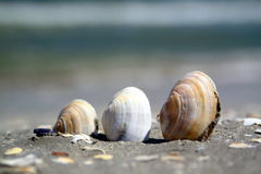 Tres cáscaras en una playa imagenes de archivo